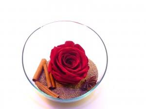 sable or et rose éternelle