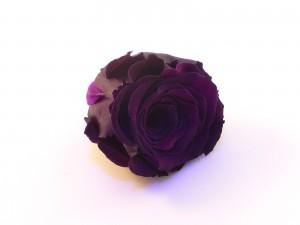 rose éternelle de couleur poupre