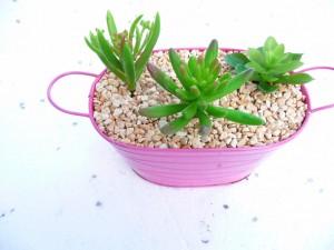 jardinière et succulents